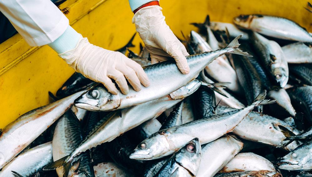Importación de pescado desde terceros paises